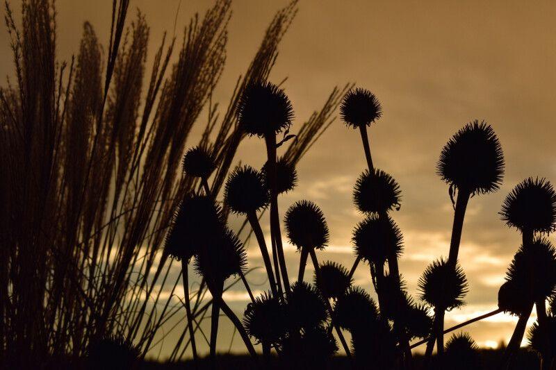 Disteln und Gräser im Herbst