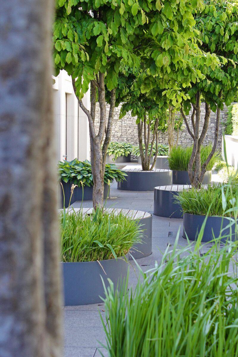 Fokus: Mit Bäumen Struktur im Ausswohnbereich schaffen