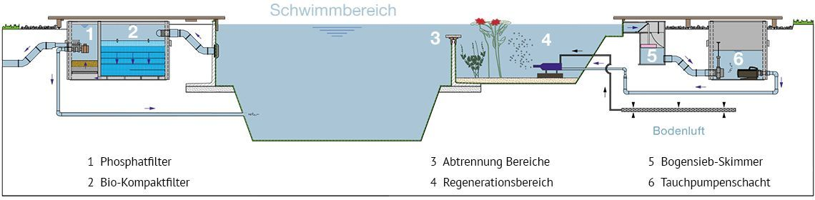 so-funktioniert-ein-Swimming-Teich