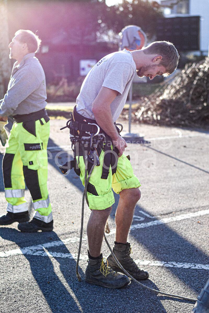 Arbeitssicherheit beim Baumklettern