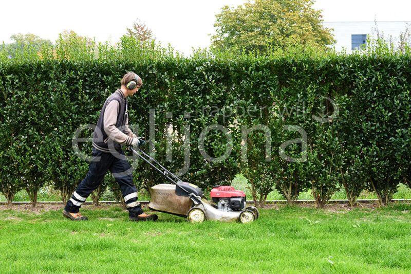 Die optimale Rasenpflege
