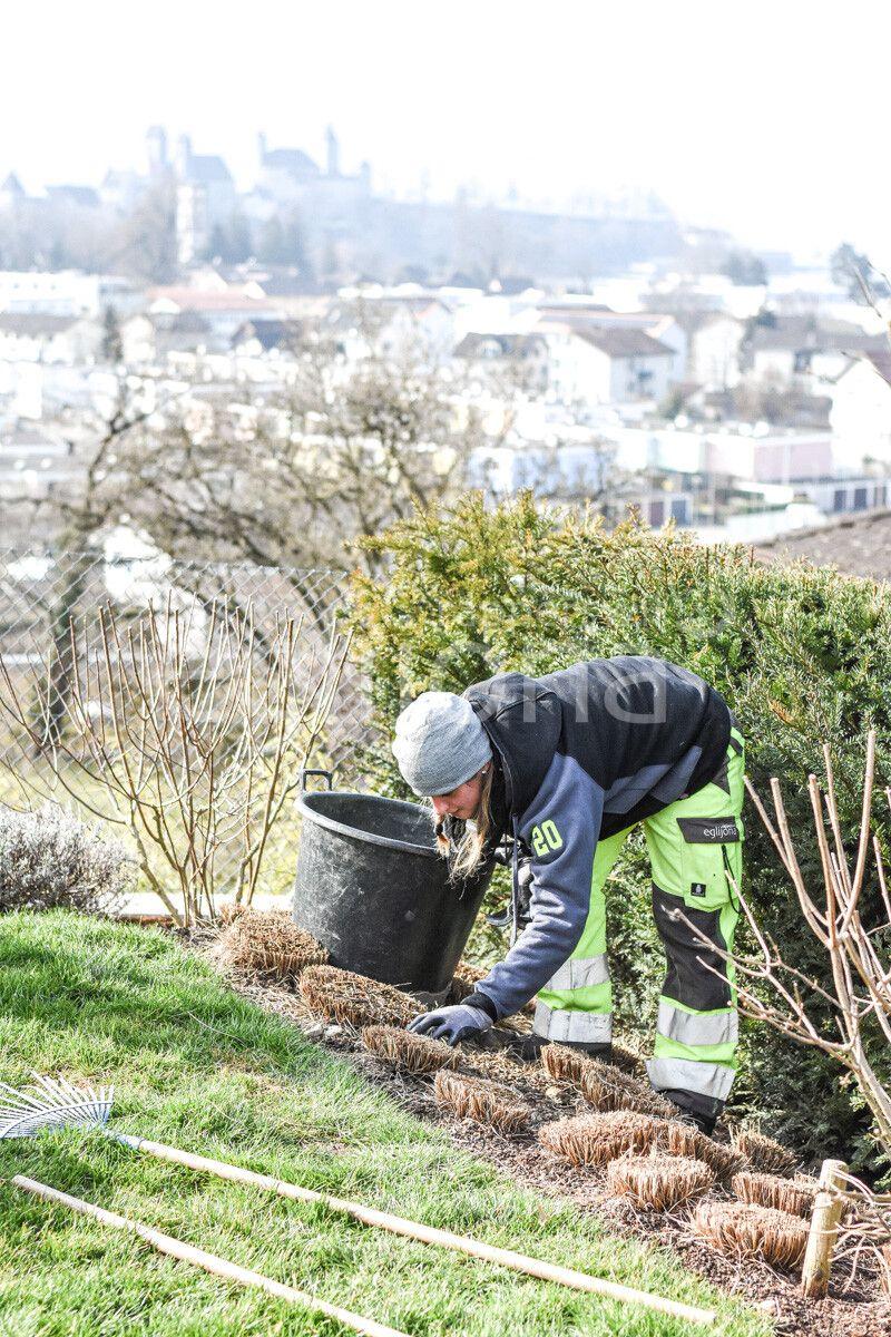 Gräserpflege im Frühling