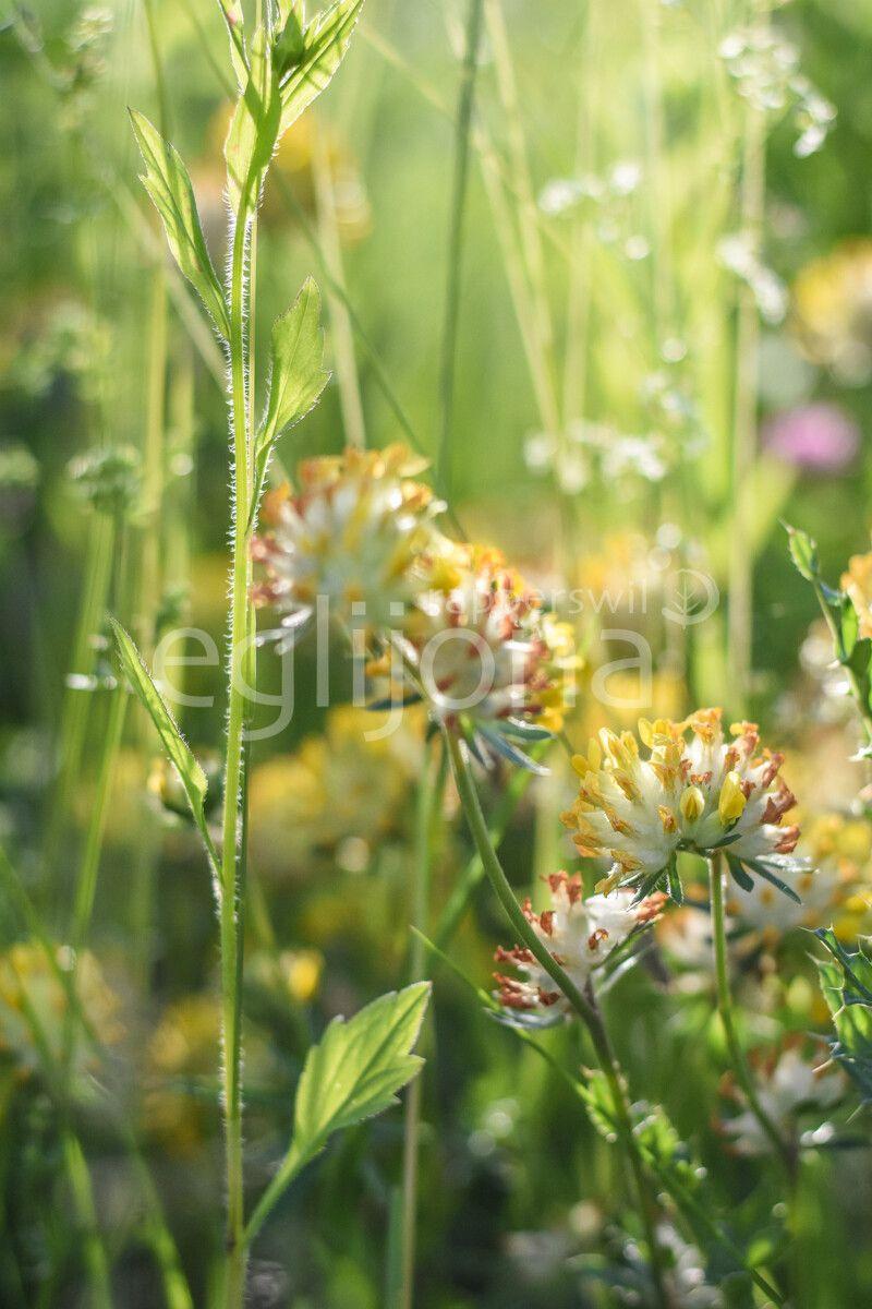 Unsere Blumenwiese in voller Pracht