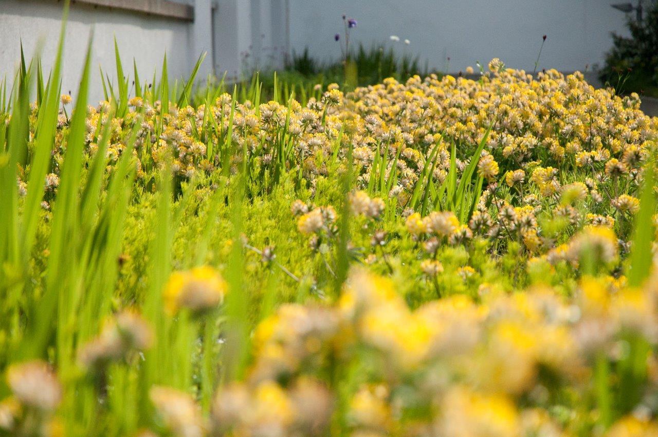 Klinik Hirslanden Eine Gartenanlage für Sinne