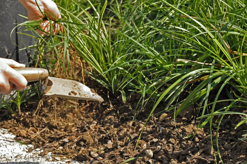 Gartenpflege Jäten