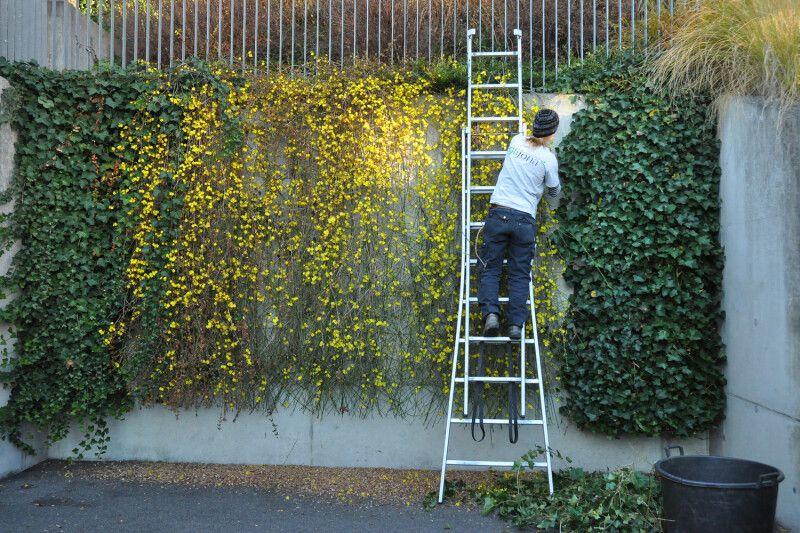 Gartenpflege Winterschnitt
