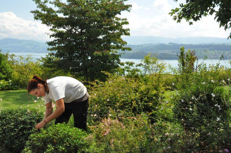 Gartenpflege Staudenpflege