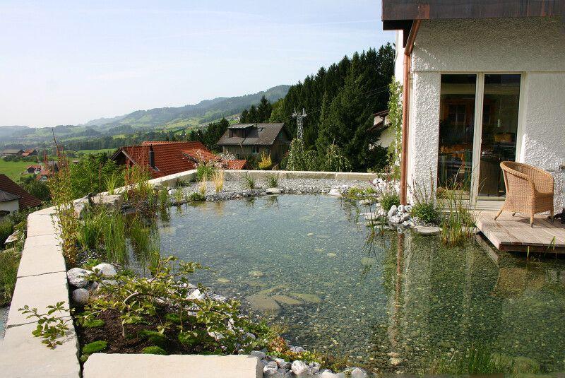 Gartenteich Biotop